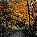 Walk In Golden Fall by Tim G Ross