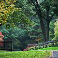 Walk In The Park by Christina Rollo
