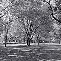 Walk In The Park by Kim Hojnacki