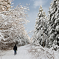 Walk In The Winterly Forest With Lots Of Snow by Matthias Hauser