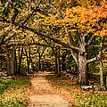Walk In The Woods by Jeff Folger