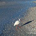 Walk Like An Ibis by Nancy L Marshall