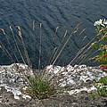 Flowers In Rock by Brenda Brown