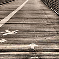 Walk This Way by JC Findley