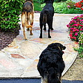 Walk This Way by Mary Beth Landis