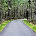 Walk Through The Forest by Cynthia Guinn