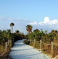 Walk Way To Beach by Kathleen Struckle