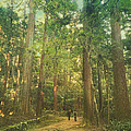 Walking Along The Kozan-ji Forest In Kyoto Japan by Beverly Claire Kaiya
