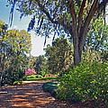 Walking In A Garden by Deborah Good