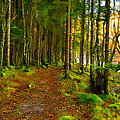 Walking In A Scottish Highland Wood by Mark E Tisdale