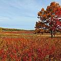 Walking In Big Meadow by Gordon Cain