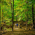 Walking In The Forest by John Ullrick