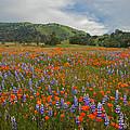 Walking In The Wildflowers by Lynn Bauer