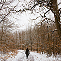 Walking In The Winterly Woodland by Matthias Hauser