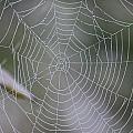 Walking Into Spiderwebs by Joel Rams