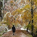 Walking Into Winter - Beautiful Autumnal Trees And The First Snow Of The Year by Matthias Hauser