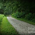 Walking Path by Douglas Stucky