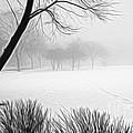 Walking Through A Winter Wonderland by Patty Colabuono