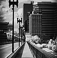 Walking To Knoxville by Paul W Faust -  Impressions of Light