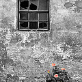 Window And Flowers by Mike Nellums