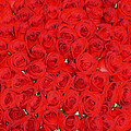 Wall Of Red Roses by Tracy Winter