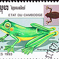 Wallace's Flying Frog by Jim Pruitt