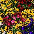 Wallflowers by Gary Emilio Cavalieri