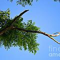 Walnut In The Sky by Tina M Wenger