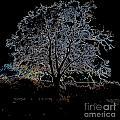 Walnut Tree Series Glowing Edges by Conni Schaftenaar