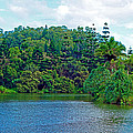 Waoleke Pond Forest by Robert Meyers-Lussier