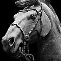 War Horse 2 by Sue Harper