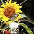 Sunflower And Warbler Bird by Luana K Perez