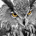 Watching You Owl by John Straton
