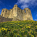 Warkworth Castle In Spring by David Pringle