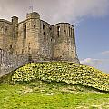 Warkworth Castle With  Daffodils by David Head