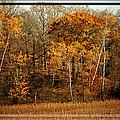 Warm Autumn Glow by Susan McMenamin