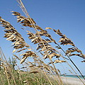 Warm Breeze Blowing by Cynthia N Couch
