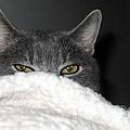 Warm Kitty by Wendy Gertz