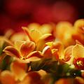 Warm Spring Glow by Susan Capuano