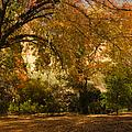 Warmth Of Autumn by Tamara Becker