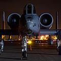 Warthog by Nathan Gingles