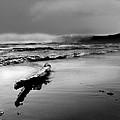 Washington Coast by John Anderson