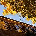 Washington D C Facades - Reflecting On Autumn In Georgetown  by Georgia Mizuleva