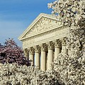 Washington Dc Cherry Blossom Supreme Court by Lois Ivancin Tavaf