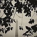 Washington Monument 2 by Joseph Hedaya