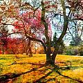 Washington Park I by Tina Baxter