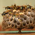 Wasp Hotel by Jeri lyn Chevalier