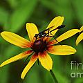 Wasp On A Susan by Kevin Fortier