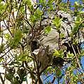Wasps' Nest by Rod Johnson