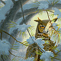 Watchful Eye-owl by Paul Krapf